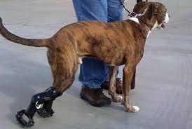 dogsinmotion